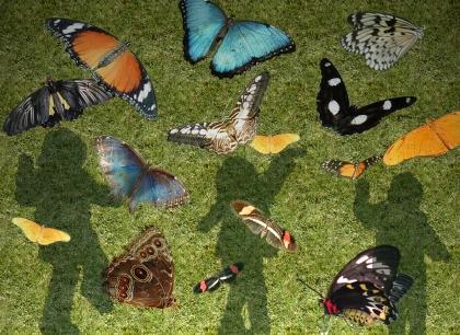 """""""Butterflies In Sunshine"""""""