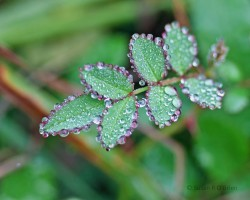 3_December_2012_Early_Morning_Rain_Nature_Small013