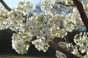 8_April_Fragrance_of_Spring_Nature_Small009