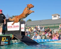 """Dockdog Competition - Topsfield Fair"""
