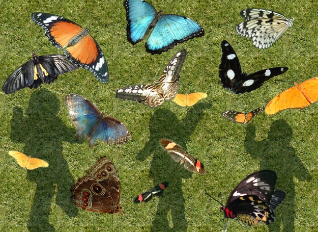 RosasButterflies